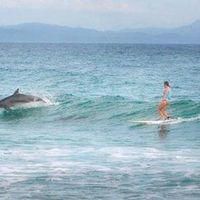 Kanskje en surfekurs i Australia er til for høsten? Ville delfiner på samme bølge er bare bonus ????  http://www.goxplore.no/aktiviteter/surfeskole-australia