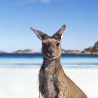 NYHET!  Vi kan med glede meddele at vårt kontor i Melbourne er åpnet! Du har nå muligheten til å velge om du vil lande i Sydney eller Melbourne! Det er snart fullt på Work and Travel Australia så husk å melde deg på i god tid! :)