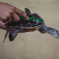 Bali- Turtle, Nusa Penida